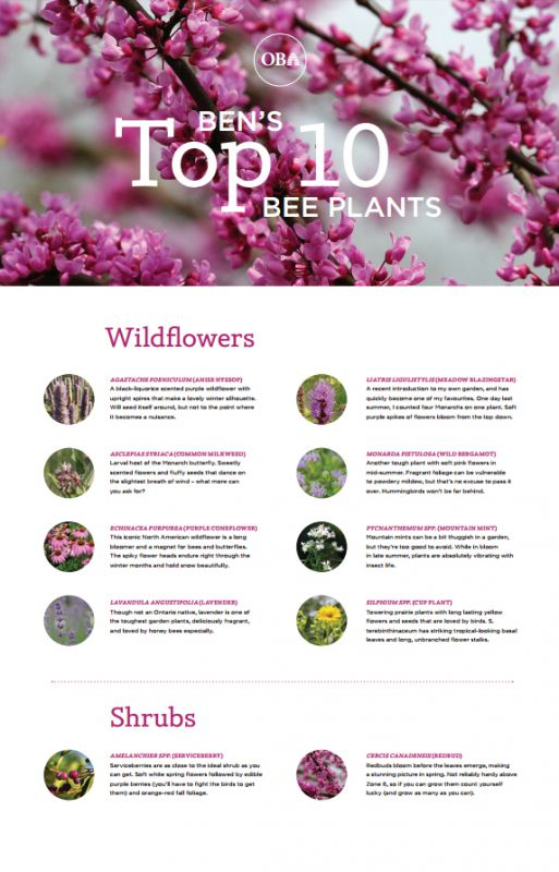 Ben's Top 10 Bee Plants
