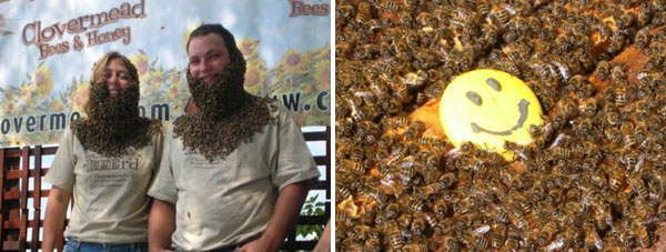 bee beards
